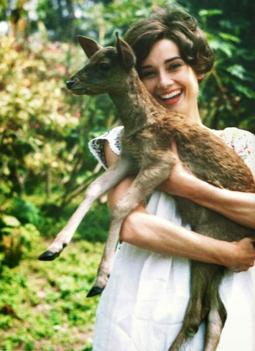 5. Одри Хепберн — олень Лучшим другом легенды кино и иконы моды Одри Хепберн был олененок. Это животное в жизни актрисы появилось на съемках фильма «Зеленые особняки», где за главной героиней повсюду следовал олененок. Чтобы лучше познакомиться с животным и привыкнуть к нему, актриса взяла его домой и так к нему привязалась, что уже не смогла расстаться.