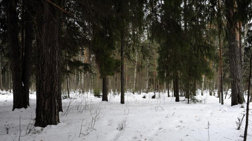 Патрулирование лесов для недопущения вырубки елок усилят с 10 декабря