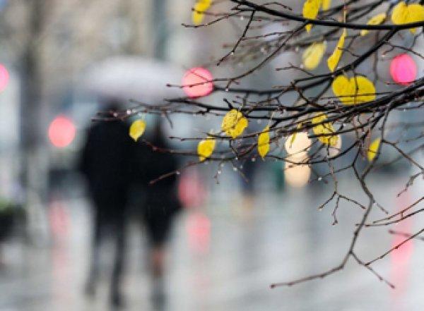 Плюс 25 градусов за четыре дня: в Россию идет аномальное потепление