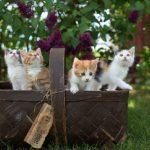 Познавательный час «Как ухаживать за домашними животными»