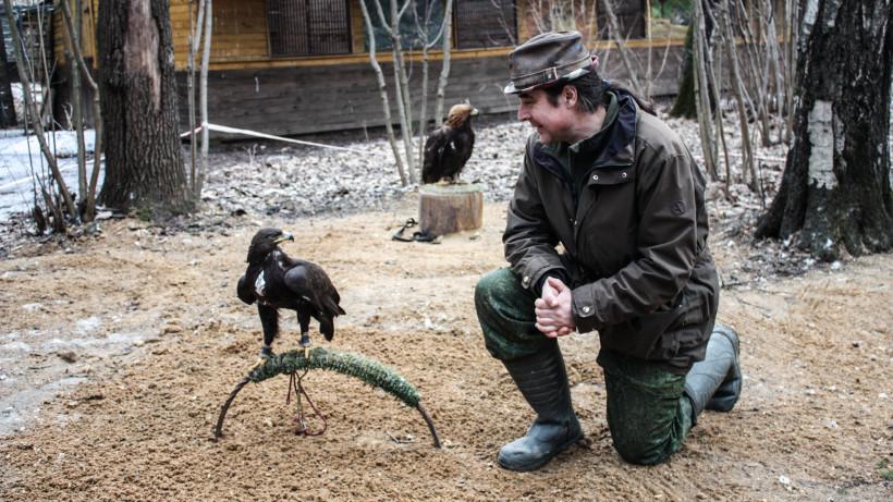 Сезон охоты на зайца и лисицу в Подмосковье продлится до 28 февраля 2020-го