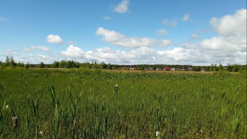 Участок под коммерческое развитие земель сдали в аренду в Жуковском на 9 лет