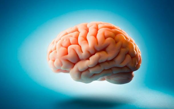 Ученые нашли окаменелый мозг, которому 500 млн лет