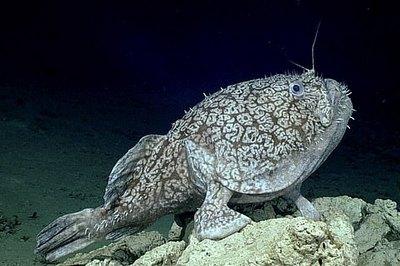 Ученые показали рыбу, использующую плавники как ноги
