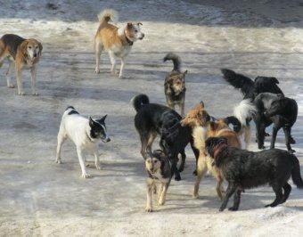 В Бурятии собака бегала по городу с телом мертвого младенца в пасти