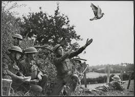 Когда голубка рухнула в руки принявших ее бойцов, те с изумлением поняли, что немцы попали в нее, и не раз: она лишилась глаза, потеряла правую ножку и была ранена в грудь. Врачи боролись за жизнь отважного голубя, и он выжил. Птице сделали деревянный протез вместо потерянной лапки, а еще наградили французским Военным крестом и золотой медалью Американского общества почтовых голубей. Шер Ами скончалась 13 июня 1919 года.