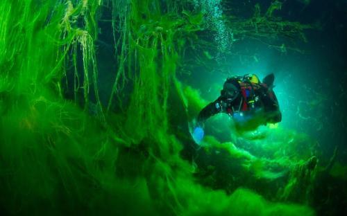 5. Профессия аквалангиста позволяет зарабатывать до 4900 долларов в месяц. Работа эта не только увлекательная, но и опасная. Особенно сильно рискуют те, кто занимается дайвингом в пещерах.