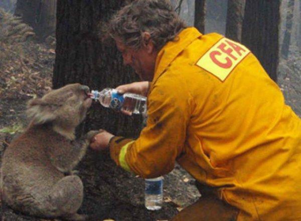 Более 1 млрд животных погибло в ужасающих пожарах в Австралии
