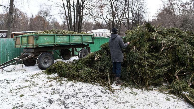 Более 10 тыс. елок сдали жители Подмосковья в рамках экоакции