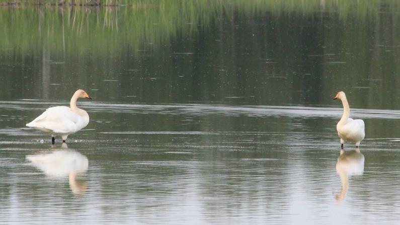 Более 70 редких и краснокнижных видов выявили на проектируемой ООПТ «Лотошинские пруды»