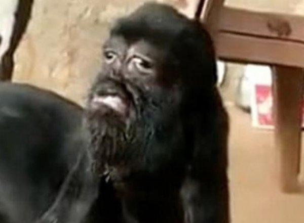 Коза-мутант с «человеческим» лицом шокировала индийцев
