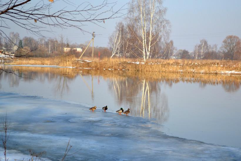 Минэкологии попросило жителей Подмосковья позаботиться об оставшихся на зимовье птицах