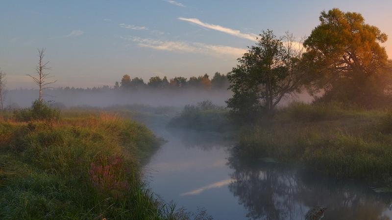 Минэкологии создаст заказник площадью свыше 1,5 тыс. га в Рузском округе