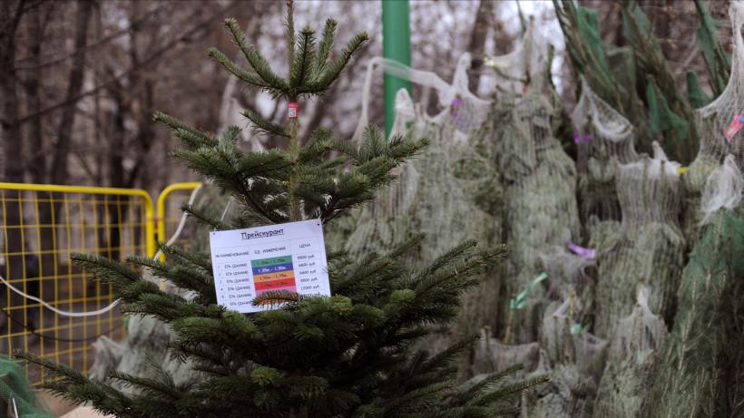 Почти 57 тыс. деревьев купили жители Подмосковья на елочных базарах