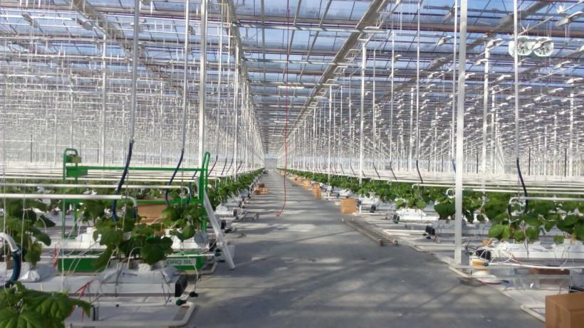 Сбор овощей в теплицах Подмосковья вырос на 60% в 2019 году