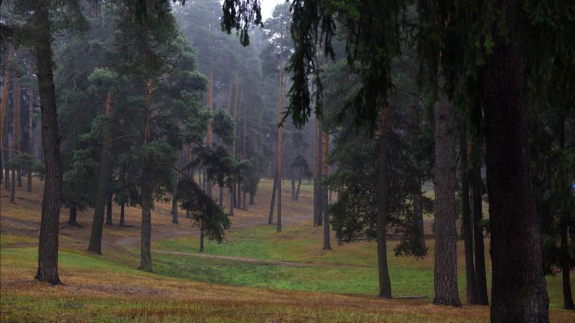 Специалисты обследуют 30 тыс. га лесов Московской области в 2020 году