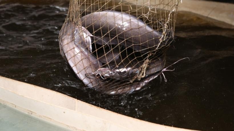 Более 5 тыс. тонн товарной рыбы произвели в Подмосковье в 2019 году