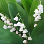 «Что мы знаем о цветах и травах»