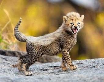 Детеныш гепарда, который учится охотиться, покорил сеть