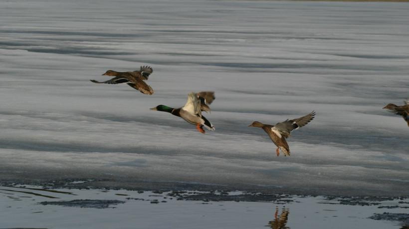 Госохотнадзор региона рекомендует воздержаться от использования на охоте луков и арбалетов