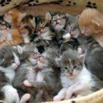 «Эти заМУРчательные кошки»