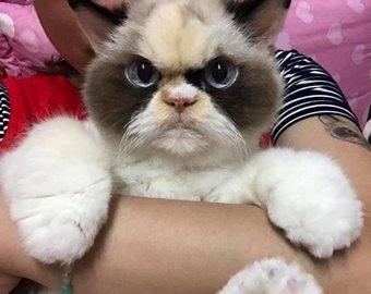 """Пользователи Сети нашли """"наследницу"""" Grumpy Cat"""