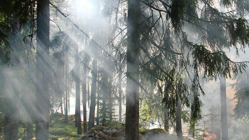 Пожароопасный сезон в лесах Московской области откроют в марте