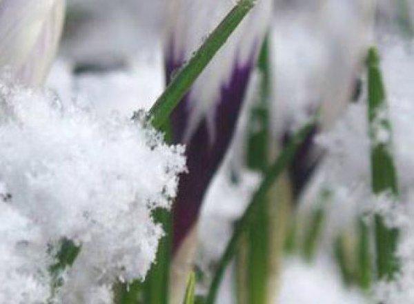 Росгидромет: март в России будет аномально теплым