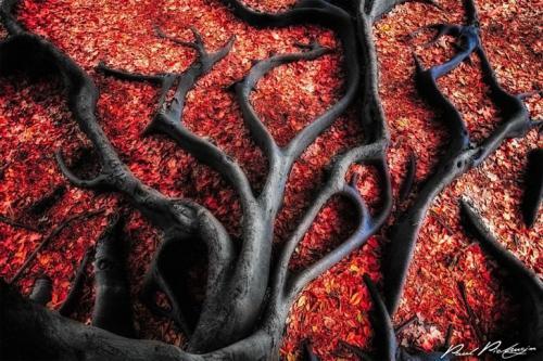 Черные корни на красных листьях. (Фото: Paul Pichugin).