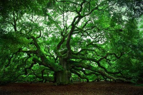 На нашей планете произрастает множество деревьев непривычного для нашего взора вида. Но там где они растут, местные жители воспринимают их как нечто само собой разумеющееся и не обращают на них особого внимания.