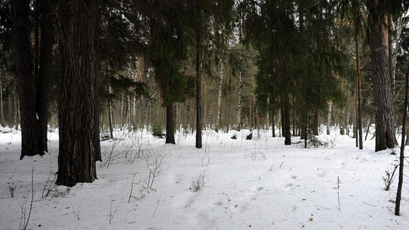 Санитарные рубки продолжаются в лесах Московской области