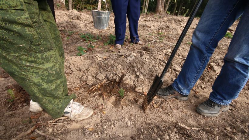 Саженцы редких сортов фундука из Ивантеевского лесопитомника скоро поступят в продажу