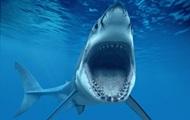 Скопление акул-людоедов около пляжей взволновало ученых