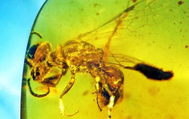 Ученые нашли пчелу в янтаре возрастом 100 млн лет