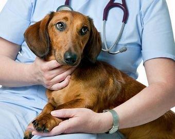 Видео с собакой на приеме у ветеринара набирает популярность в Сети