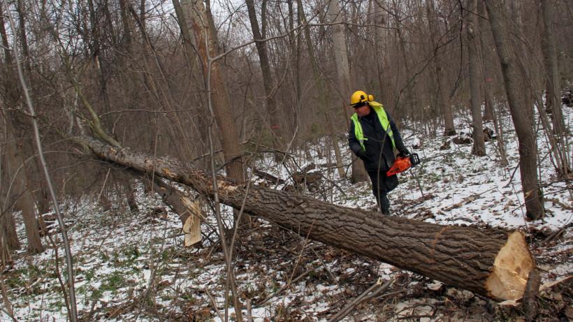 Выборочные санитарные рубки провели в лесах Подмосковья на минувшей неделе
