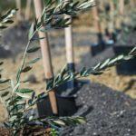 Акция «Посади дерево и сохрани его»