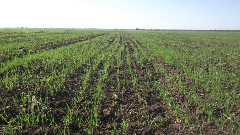 Активные весенние полевые работы начали в 10 городских округах Московской области