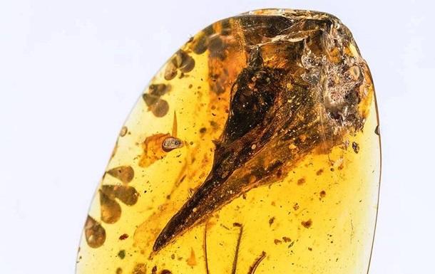 """Череп динозавра-""""колибри"""" найден в янтаре"""