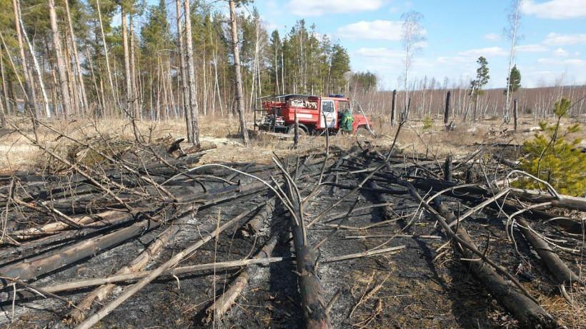 Лесной пожар потушили в Луховицах в минувшее воскресенье