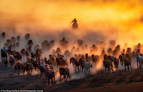 Тьен Санг Кок, Малайзия — «Табун в монгольской степи»