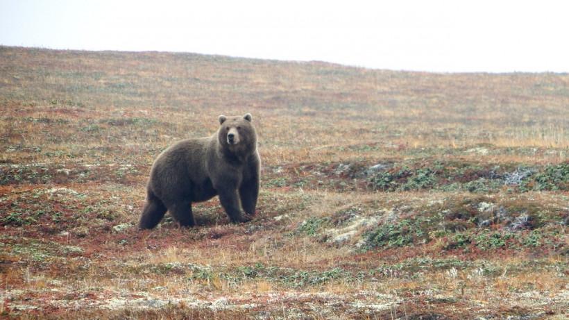 Минэкологии Подмосковья предупреждает об опасности встречи с медведем
