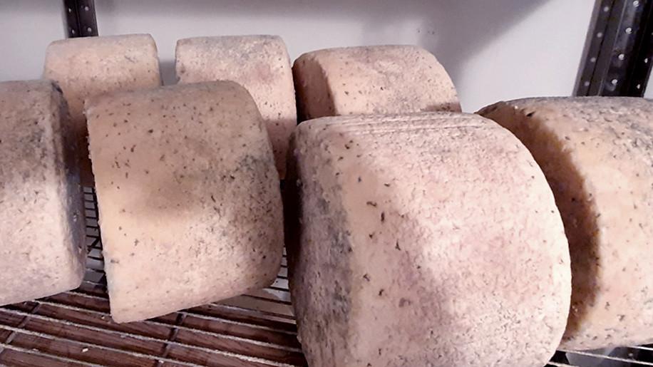 Монтаж климатических камер созревания сыра начали на предприятии в Наро-Фоминском округе
