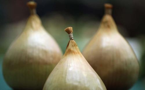 В Хитроу, Африканский принц, получавший образование в Гарварде был пойман при попытке контрабанды кокаина на сумму £ 163 000, спрятанного внутри выдолбленных луковиц.