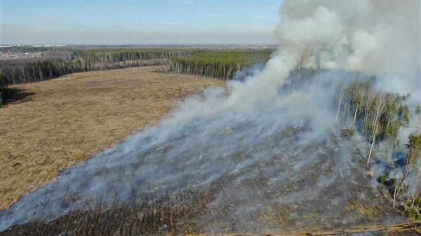 Пожароопасный сезон начался в лесах Московской области