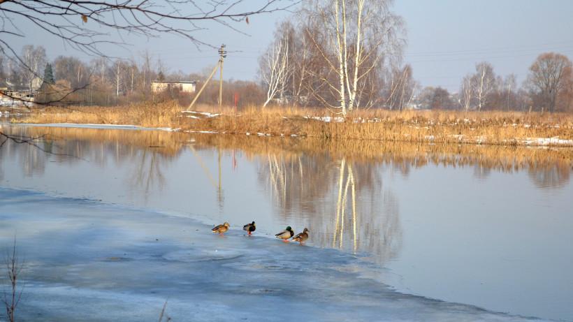 Проект расчистки реки Клязьма получил положительное заключение госэкспертизы