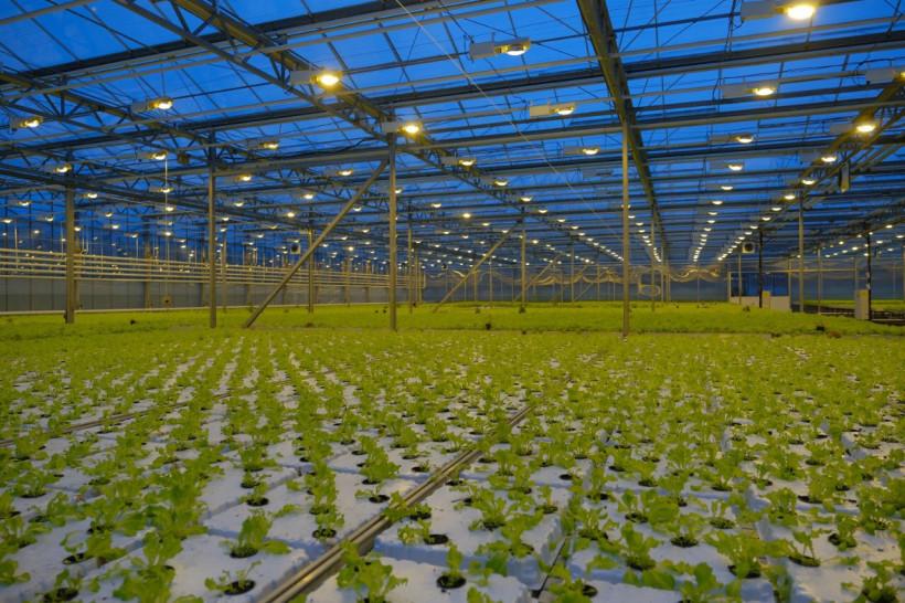 С начала года в теплицах Московской области собрали более 20,2 тысячи тонн овощей