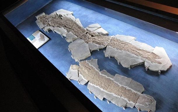 """В Канаде нашли скелет древней рыбы с """"пальцами"""""""