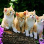 Выставка «Кошкин день»