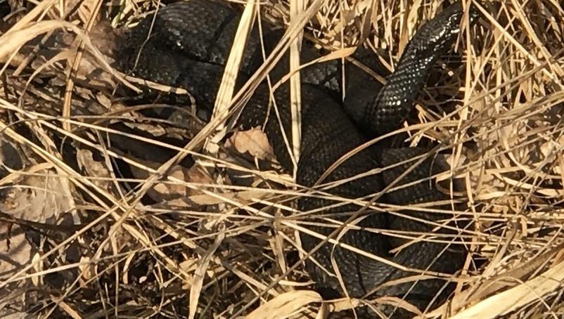 Жители Воскресенска обнаружили скопление гадюк вблизи реки Натынка